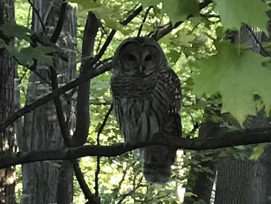 Owls of many types seen in area