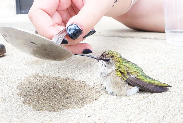 Hummingbird gets some help on its way