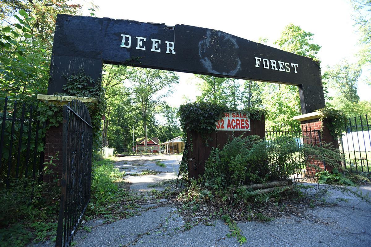 210921-HP-deer-forest2-photo.jpg