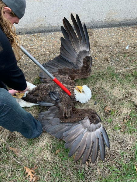 200330-HP-bald-eagle.jpg
