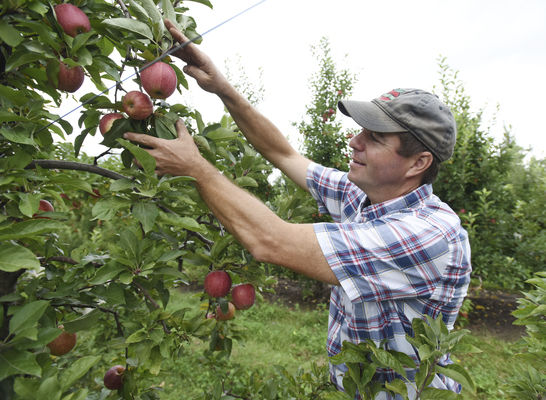Orchards enjoy fruitful returns