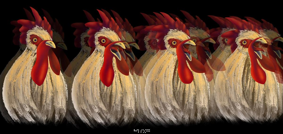 Roosters Lillian Broderick