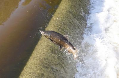 Benzonia salmon scene simply weird