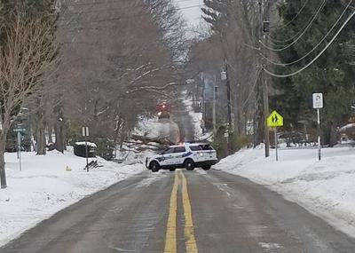 Tree takes out power lines in SJ