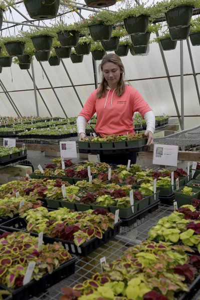 Garden centers enjoy success during crisis