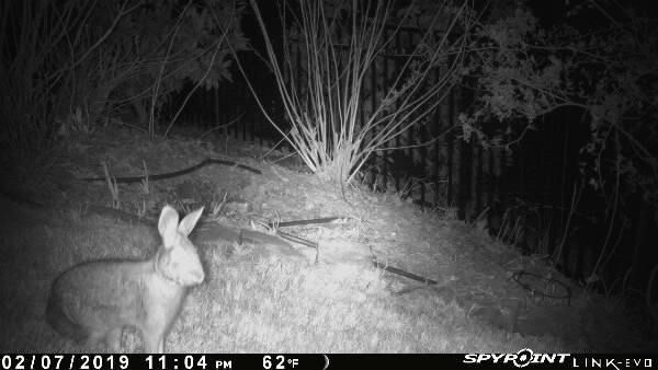 Camera traps can help gardeners