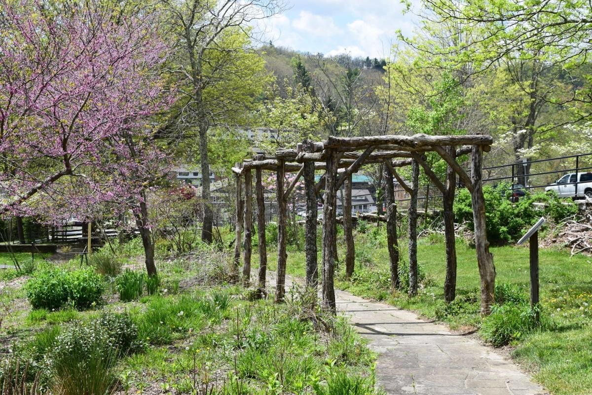 A Blue Ridge Mountain spring 2
