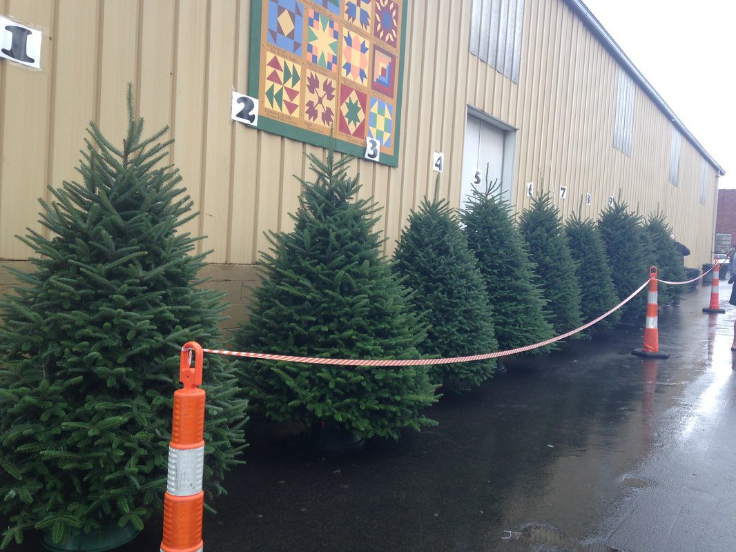 Last year's trees lined up outside Parsons Farm & Supply