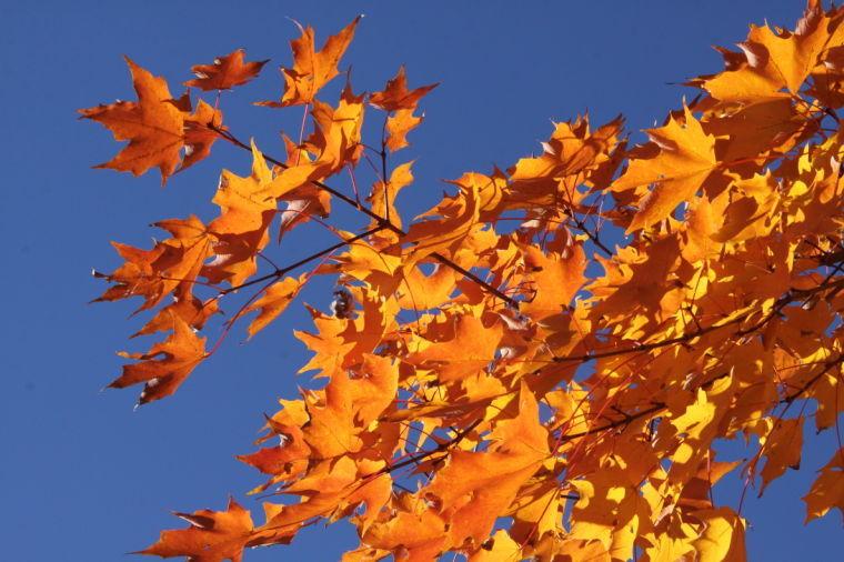 Leaf Season