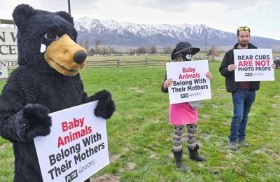 bear protest
