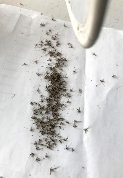 Mosquito Abatement file