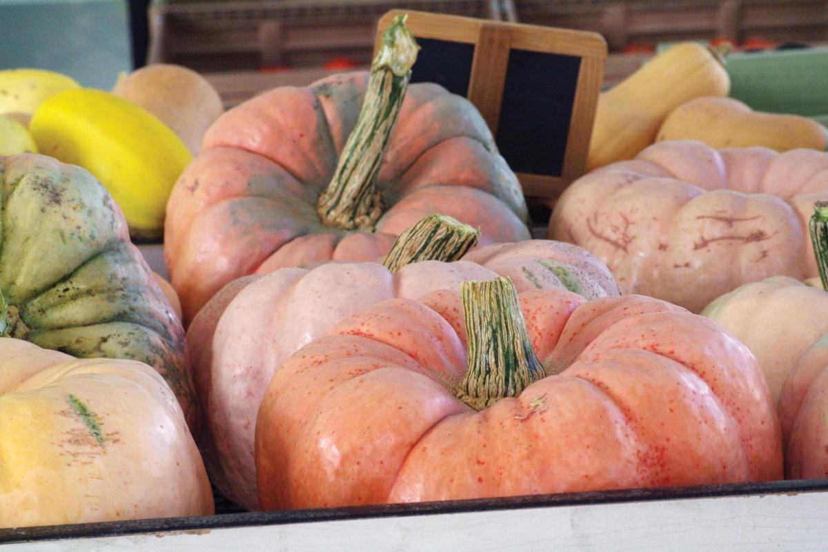 Pick a pumpkin, any pumpkin!