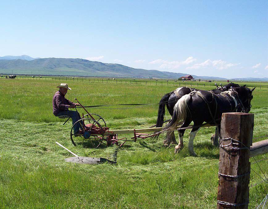 Woolstenhulme and Ochsenbein mow hay as in olden times