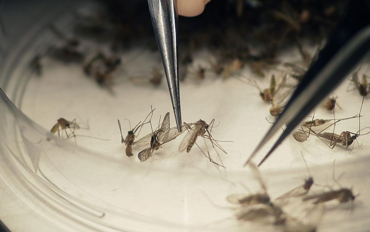 Utah health officials caution pregnant travelers to beware of Zika