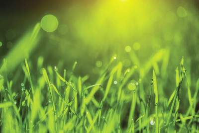 How grass grows is uncomplicated