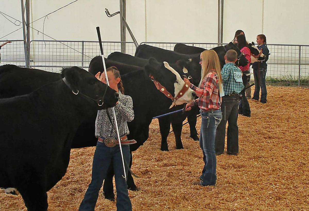 Bear Lake County 4-H and FFA Fair Activities Will Continue as Normal
