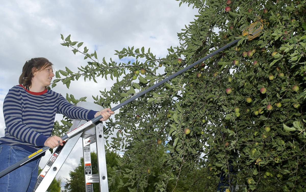 USU Gleaning Team prevents food waste, insecurity
