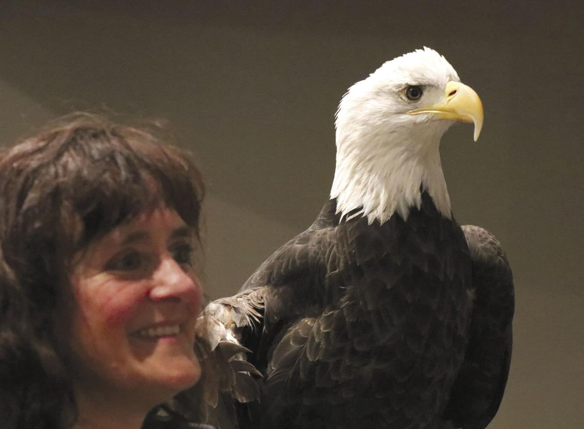 Eagles and falcons and hawks – oh my!