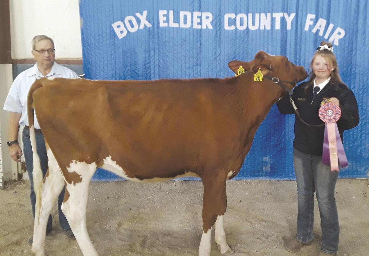 Dairy heifer reserve champion