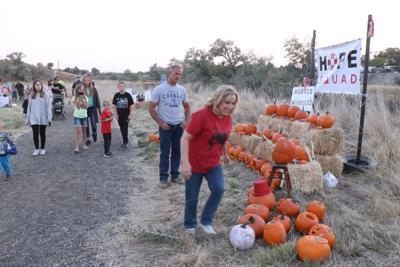 pumpkin walk 13