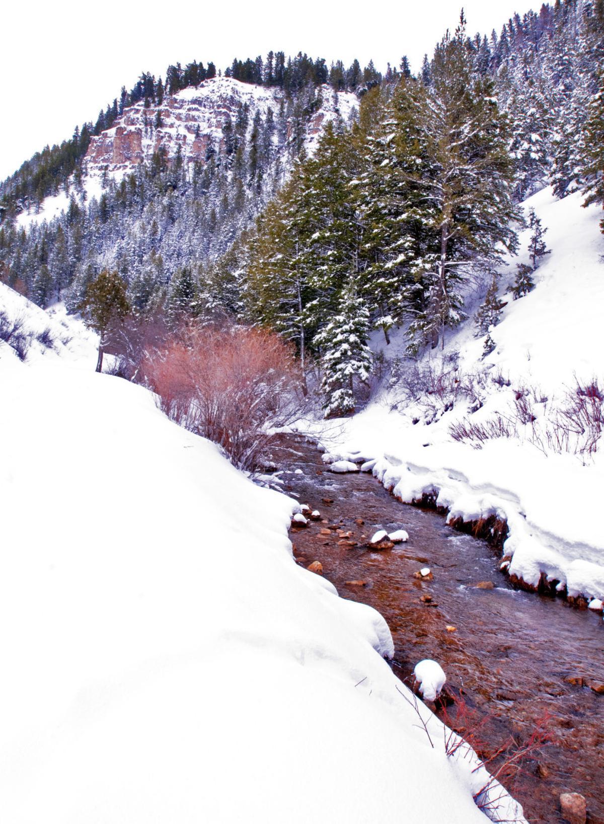 Temple Fork - Spawn Creek
