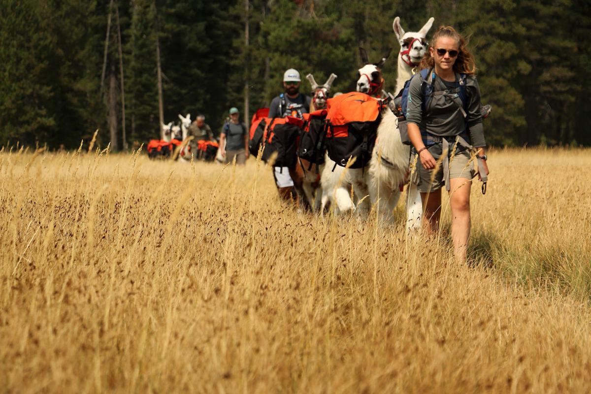 hiking llamas