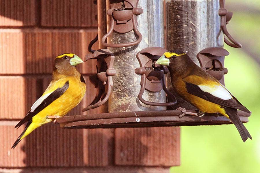 Due to bird salmonella outbreak, Utahns asked to clean bird feeders and remove them if sick/dead birds discovered