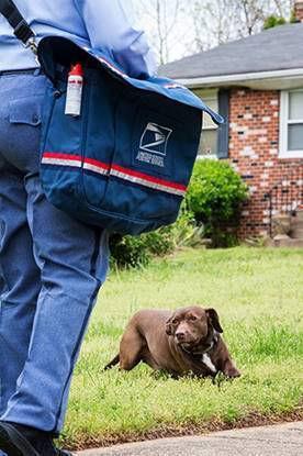 Postal Service.jpg