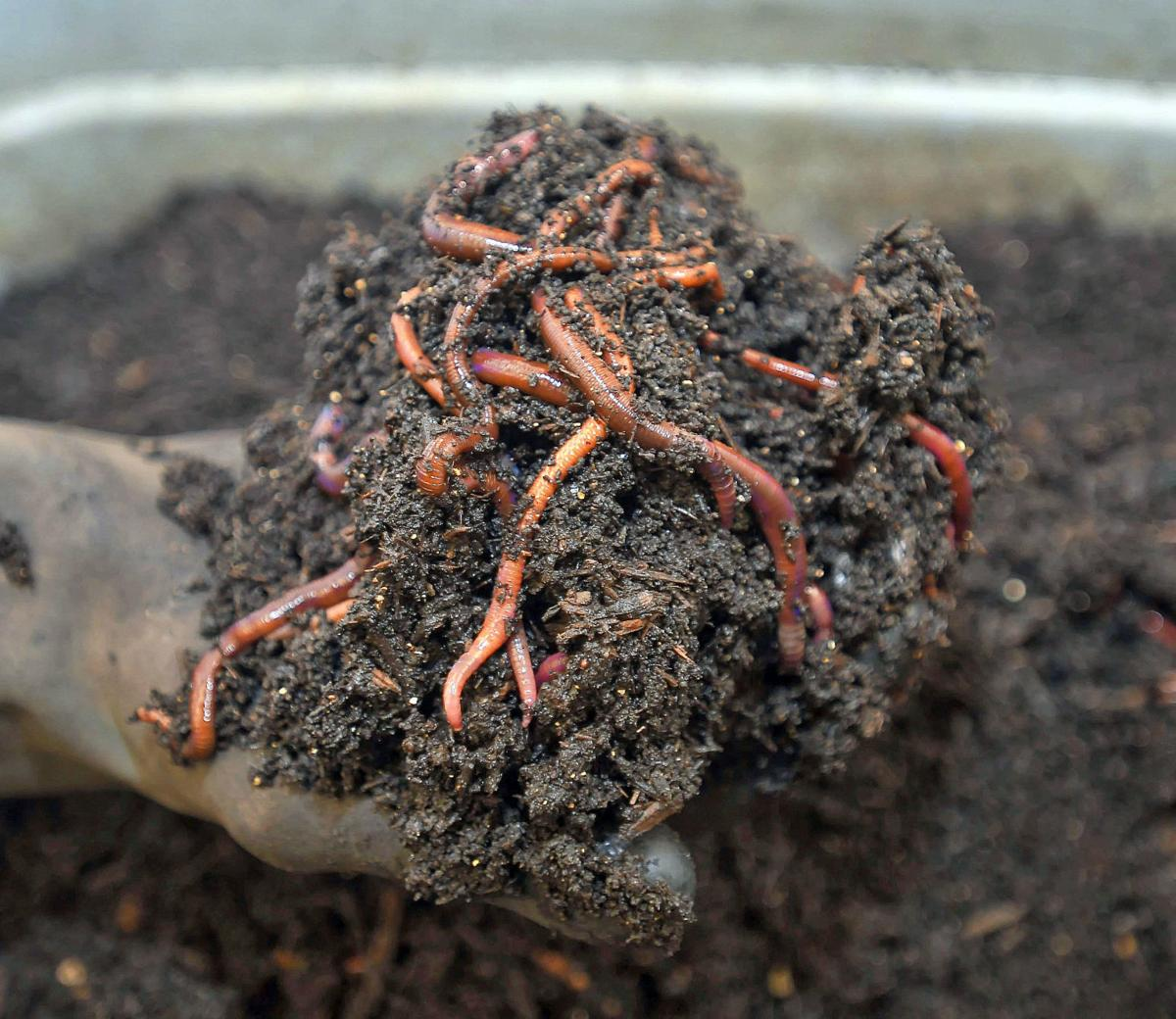 worm castings SECONDARY
