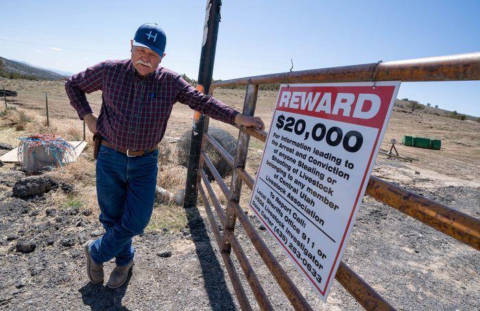 Shootings of Utah cows, horses skyrocketed during pandemic
