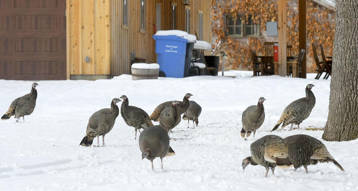 mendon turkey MAIN