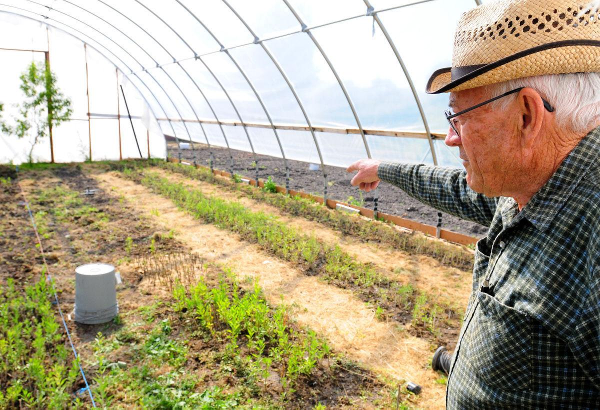 Superfood Valley Farmer Produces Goji Berries Educates Public Agriculture Hjnews Com