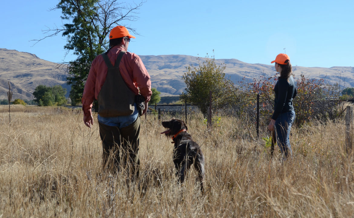 Mild winter and hot summer likely to create a mixed bag for upland bird hunters