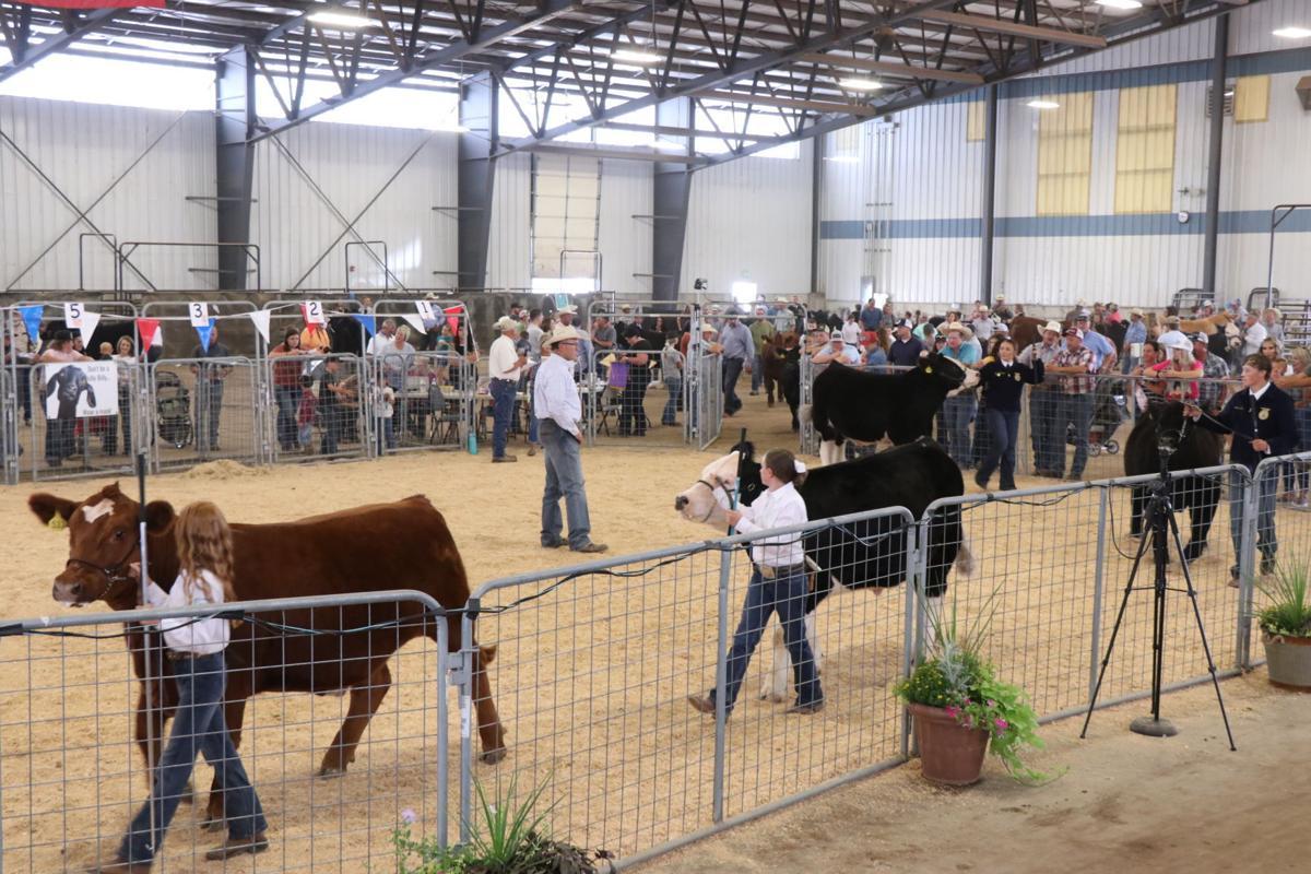 steer show 1