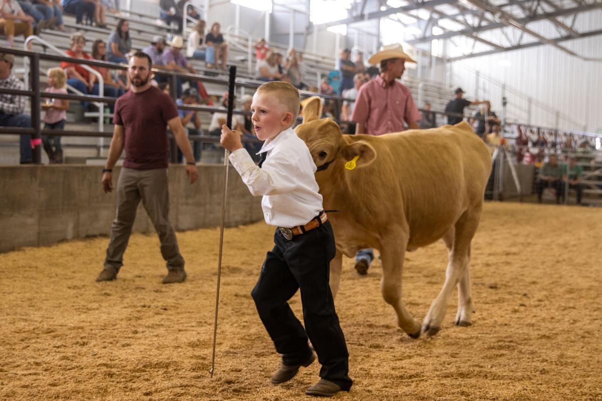 junior livestock 1