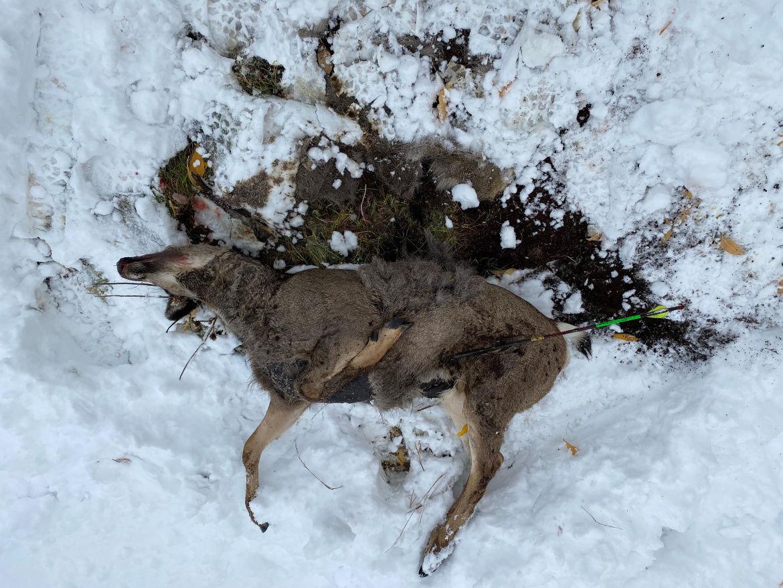 Mule deer doe illegally killed with blunt-tipped arrow in Soda Springs