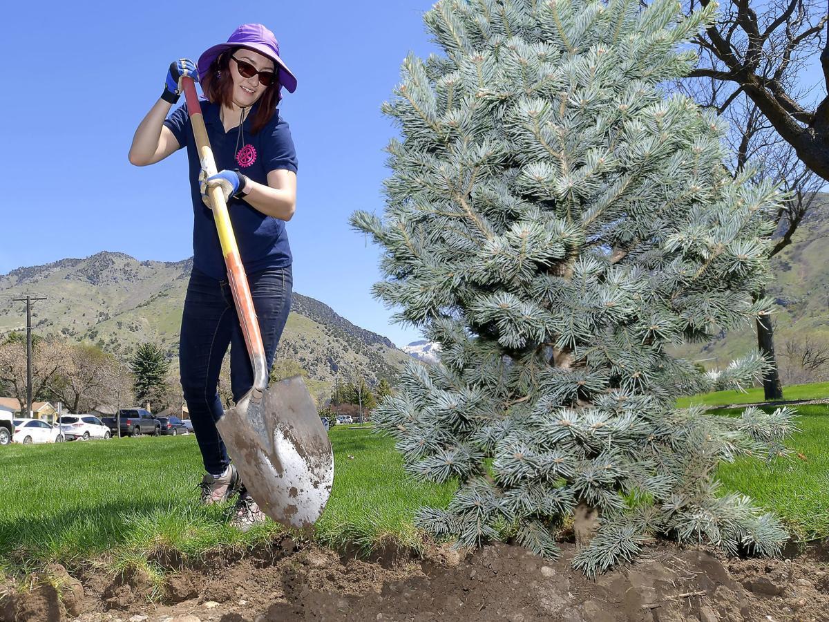 tree planting MAIN