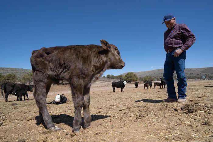 livestock killings 2