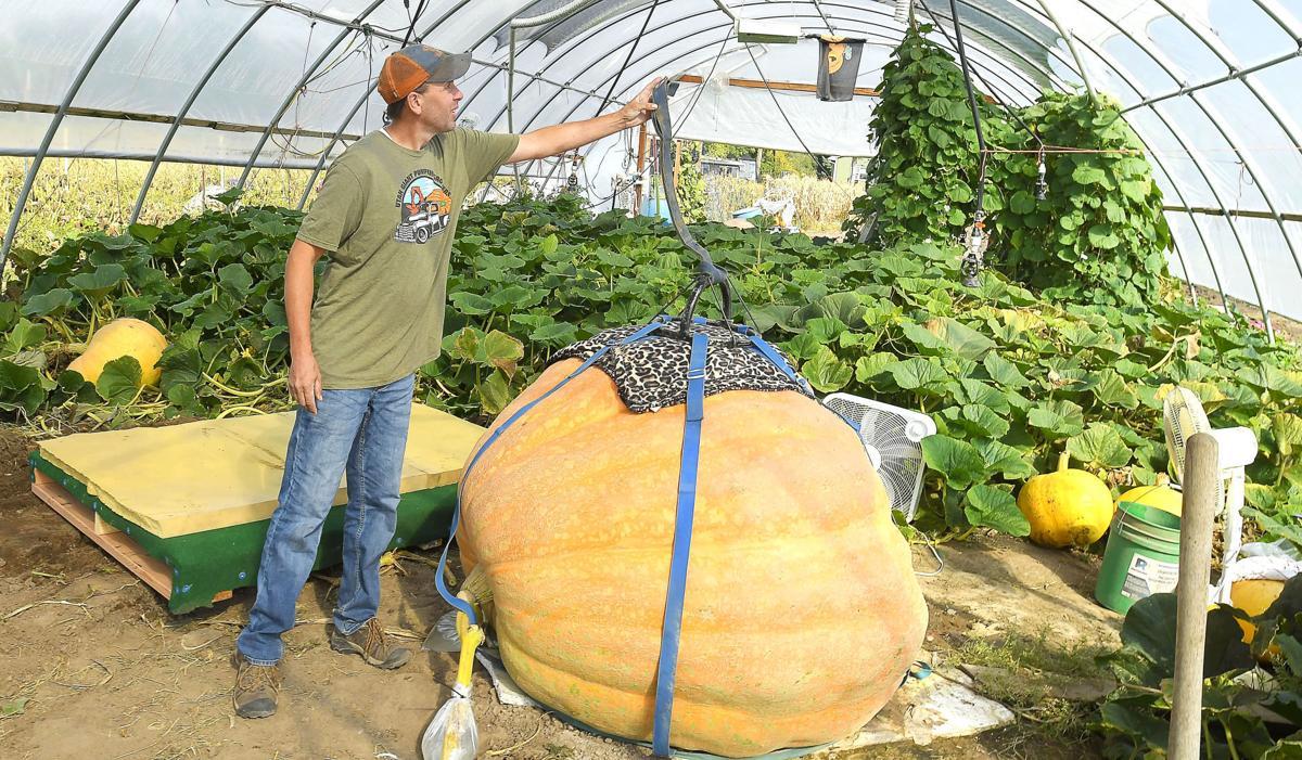 giant pumpkin MAIN