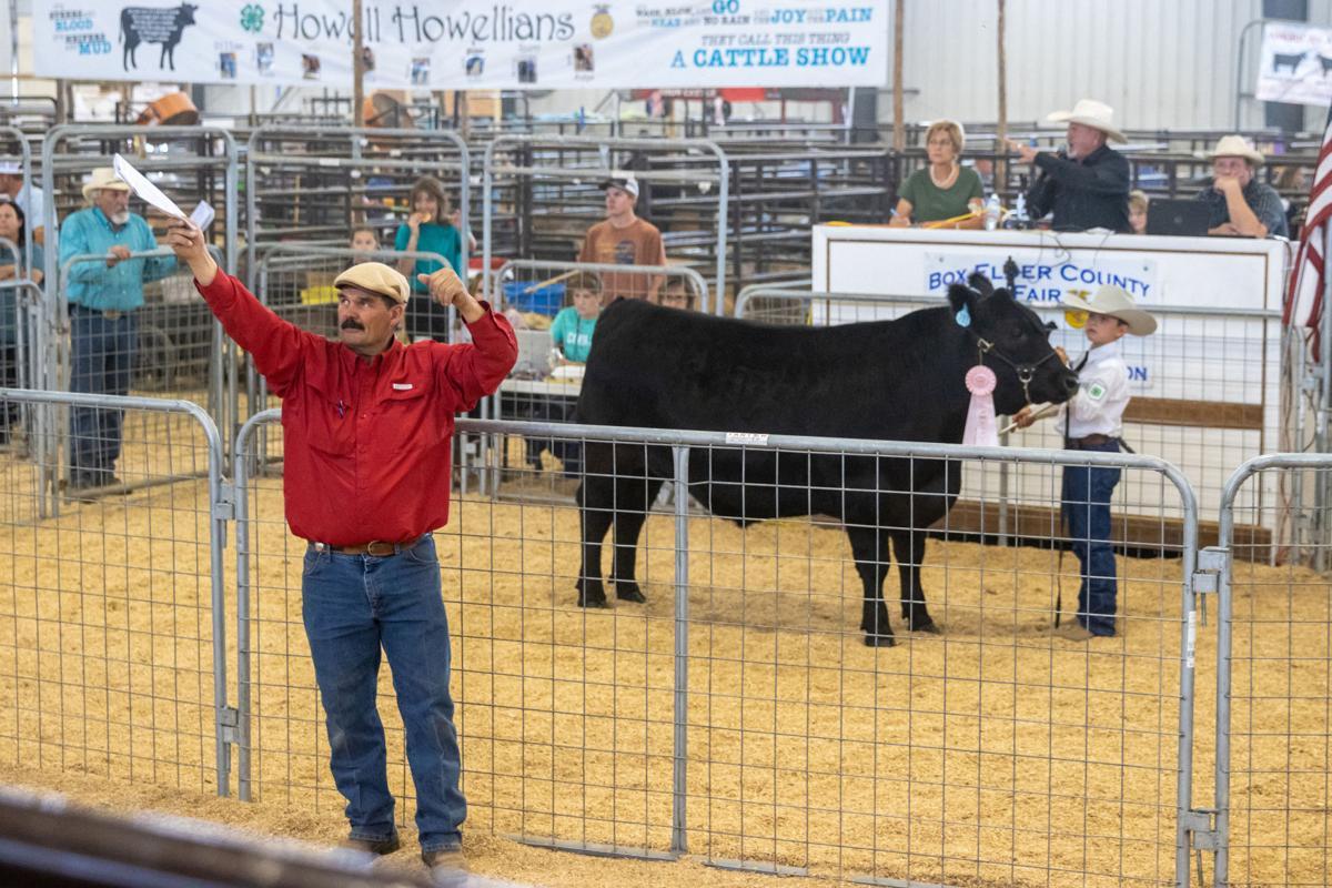 junior livestock 2