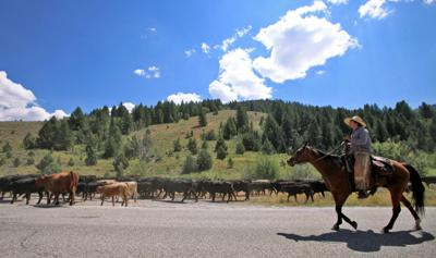 Logan Canyon Cattle Drive file art