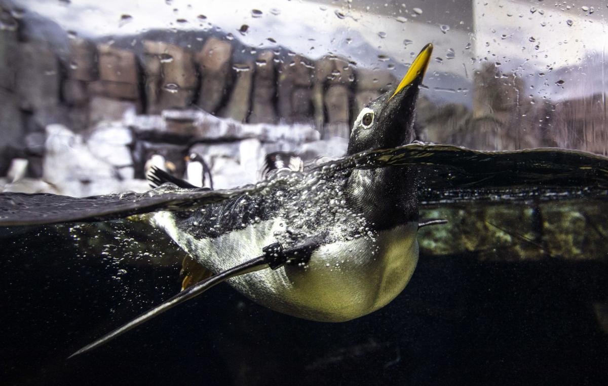 Exchange Unfaithful Penguins