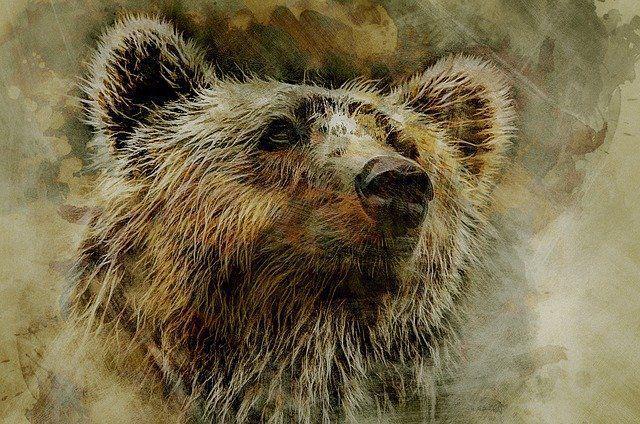 Old Ephraim, the Great Bear