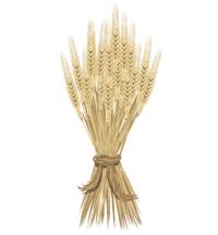 Wheat: a steady staple of nutrition