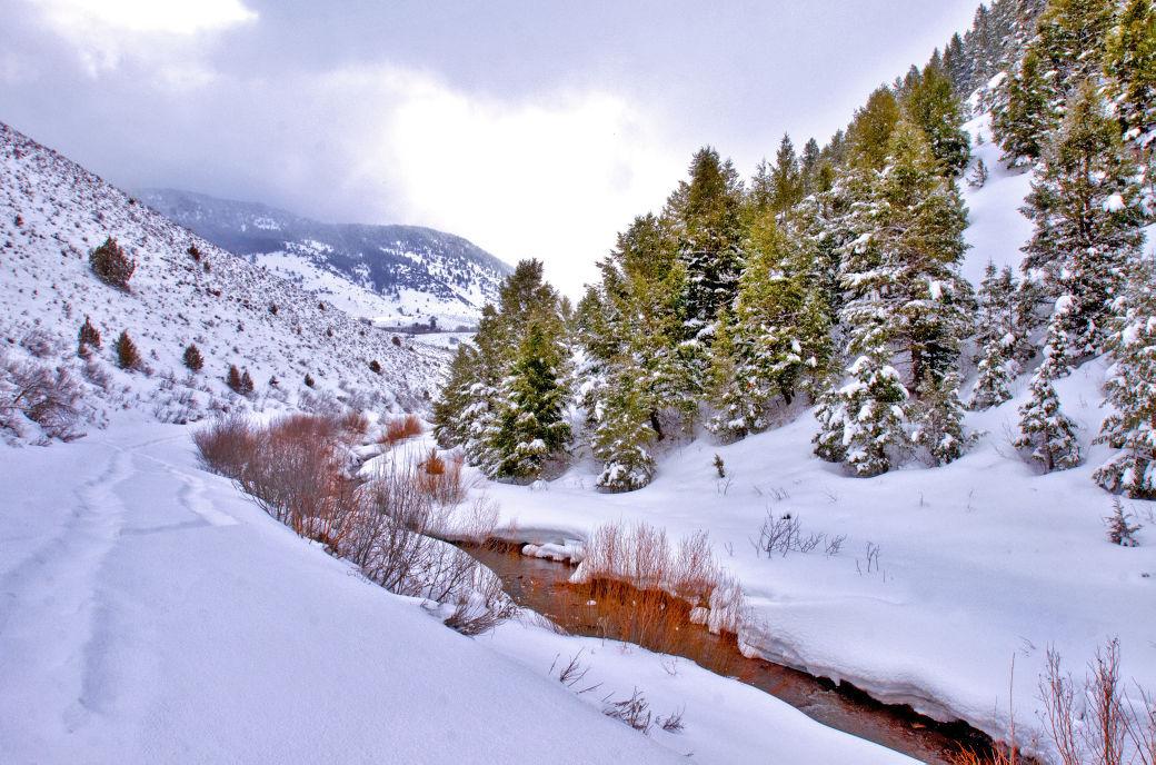 Temple Fork - Spawn Creek Main