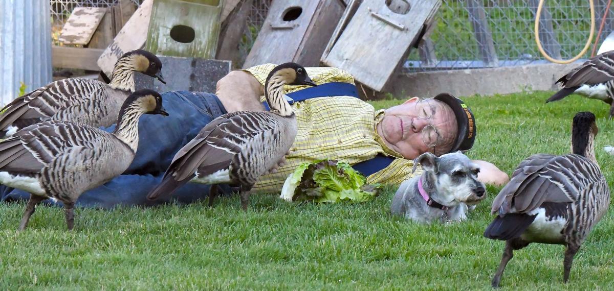 Doug Eames birds MAIN