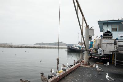 Image-Harbor Commission approves hoist on pier