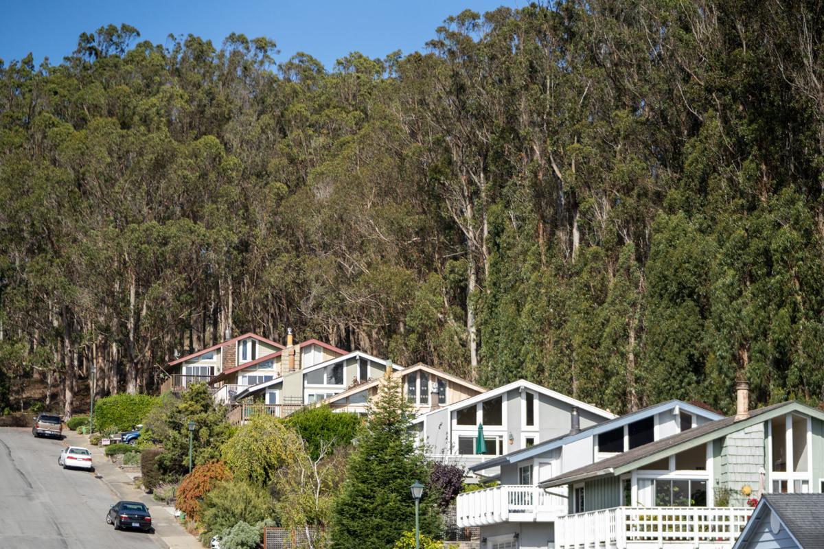 Eucalyptus Trees Coral Reef Avenue