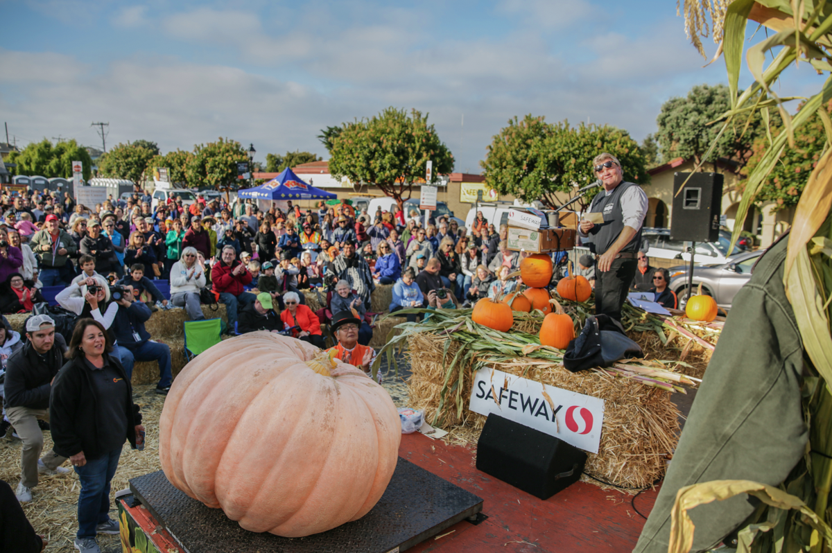 image-big pumpkin 10