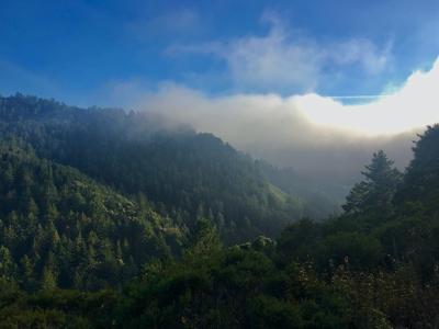 image-redwoods
